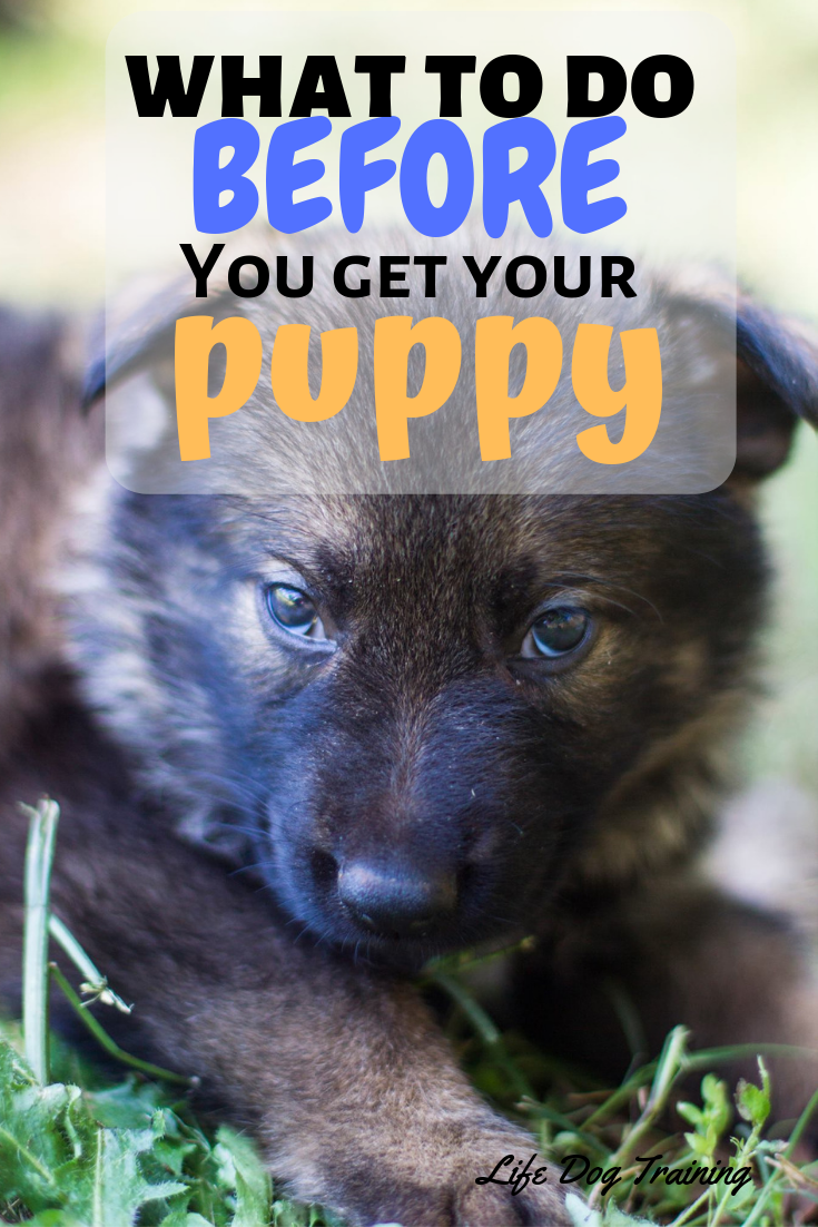 "What to do ""BEFORE You Get Your Puppy"". I love the practical DIY tips on Toys and Supplies, Breeders, Socialization, Potty Training, and Mouthing. This free eBook is very helpful."