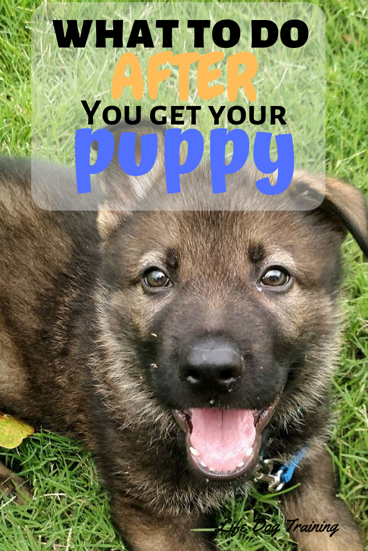 "What to do ""AFTER You Get Your Puppy"". I love the practical DIY tips for Potty Training, Socialization, Barking, and Mouthing. This free puppy eBook is very helpful."