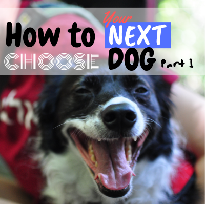 How to Choose Your Next Dog Part 1. What Matters?