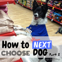 How to Choose Your Next Dog Part 2 Where to Find Your Dog is full of useful information about breeders, different types of rescues, where not to go, and how to decide whether a dog is right for you or not.